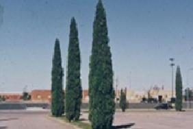 juniper woodward