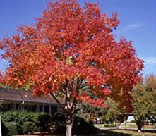 Deciduos Trees