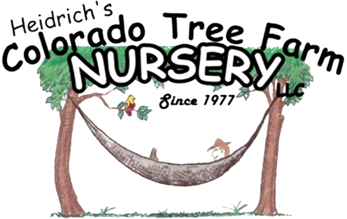 Heidrich S Colorado Tree Farm Nursery